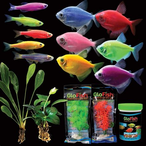glofish colors 17 best images about buy glofish 174 on