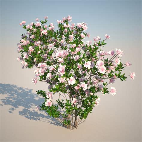 Azalea Shoo azalea japonica