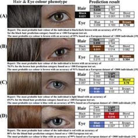 hair color calculator human hair color genetics chart search genetics