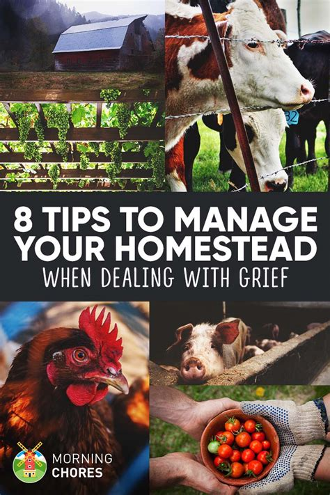8 Tips To Help You 8 Tips To Help You Manage Your Homestead When Dealing With