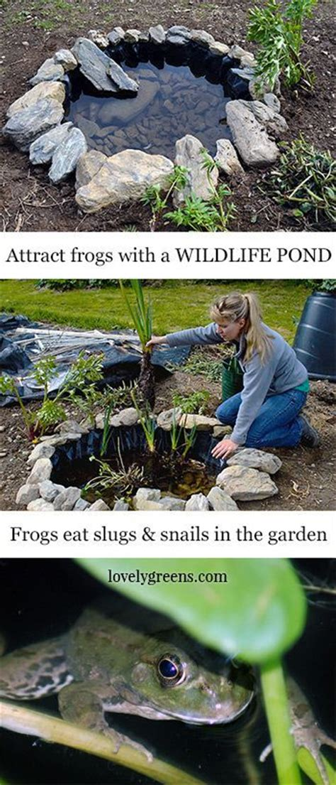 how to catch a frog in your backyard 86 best images about mr toad friends on