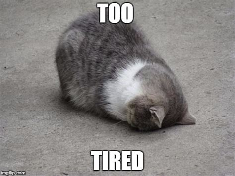 Too Tired Meme - face down cat imgflip