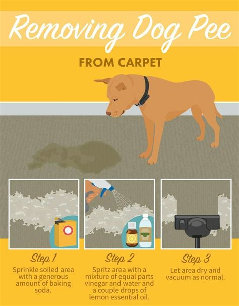 unique dog pee ideas  pinterest cleaning dog pee