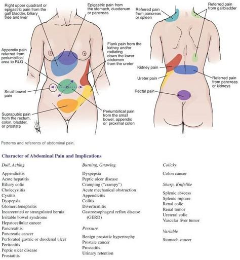 severe abdominal pain after c section 1000 images about referred pain abdominal quadrants on