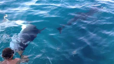 bagno con delfini sardegna 2013 bagno con i delfini a golfo aranci
