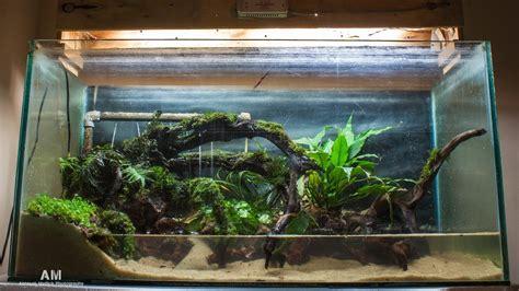 aqua terrarium designs kolkata aquarium club view topic steps into aqua terrarium paludrium