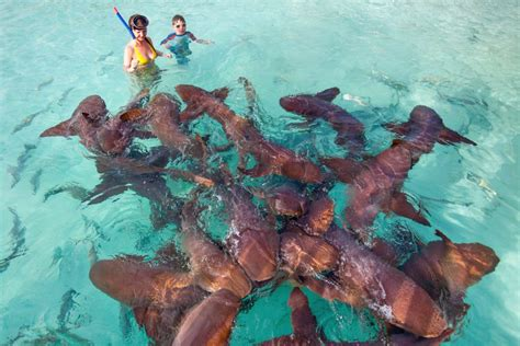 boat ride to bahamas swimming with the exuma pigs an exotic adventure at