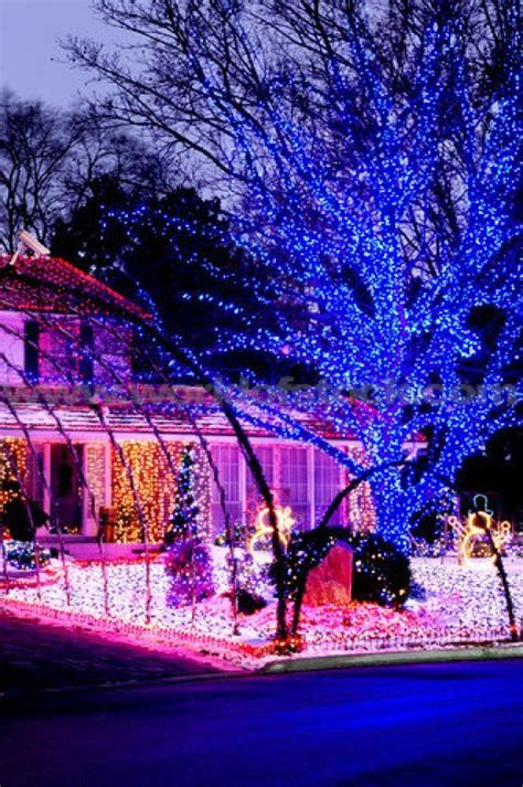 purple christmas lights pinterest gardens outdoor