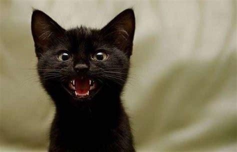 persone portano sfiga gatti neri foto tutto gratis