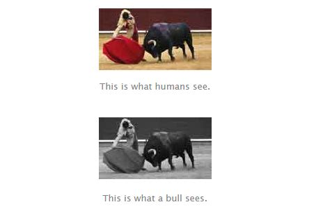 are bulls color blind how do animals see colors how is their vision different