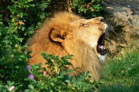 überwachungskamera für tiere 15 tiere f 252 r die sich ein zoo besuch lohnt ditzingen