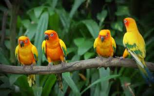 birds wallpaper wallpapers love birds desktop wallpapers