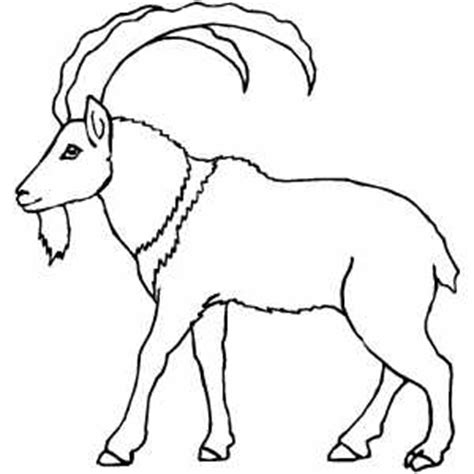 coloring pages mountain goat mountain goat coloring pages