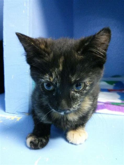 spokane humane society dogs cat friday help spokane s homeless cats and dogs this weekend bloglander