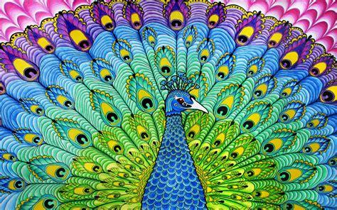 What Does Orange Symbolize Free Peacock Pics Wallpaper