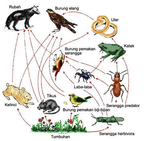aktivitas praktikum ekologi tumbuhan biologi fkip unpas bandung 2011 kelas b ekosistem aliran