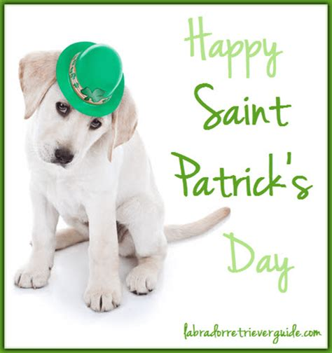 St Patricks Day Memes - happy st patricks day meme 28 images st patrick s day