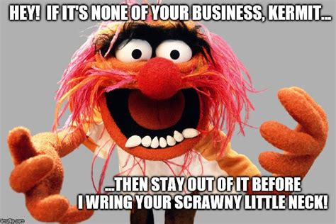 Meme Muppets - animal muppets stay out of it kermit imgflip
