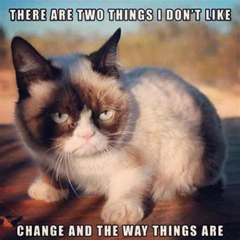 Unhappy Cat Meme - grumpy cat meme grumpy cat pictures and angry cat meme