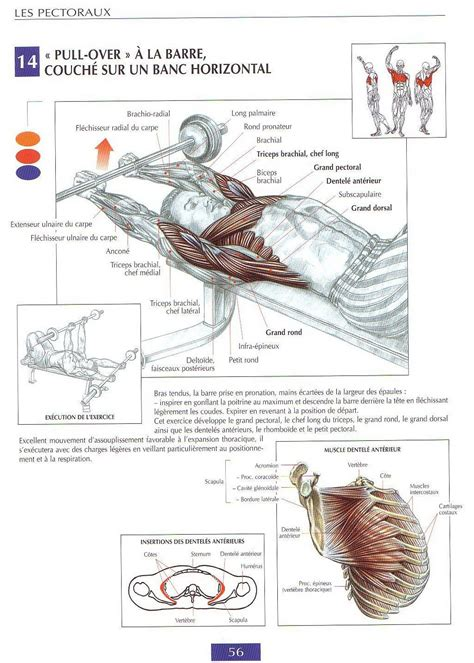 best chest workouts guide de musculation