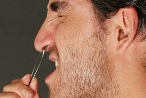 Plucking Your Hair by Ingrown Hair In Nose Pictures Pimple Symptoms Pluck