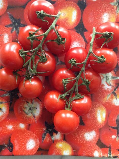 tomaten ausgeizen ab wann zeitschriftenwurm wann gibt es endlich gescheite tomaten