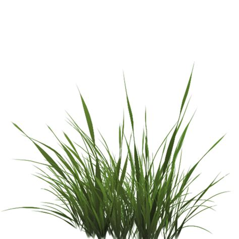 Tall Grass Texture Alpha #44173 - Free Icons and PNG ...