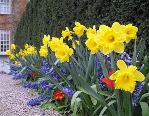 Bright Garden Flowers Bright Colored Easter Flower Garden