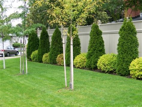 backyard trees and shrubs thelawnking com your local toronto and etobicoke lawncare and garden care company