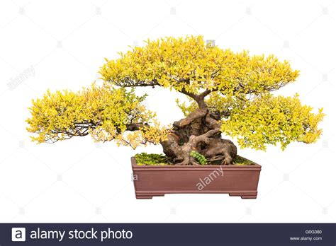 Tree Trunk Cut Out Stock Images Amp Pictures Alamy