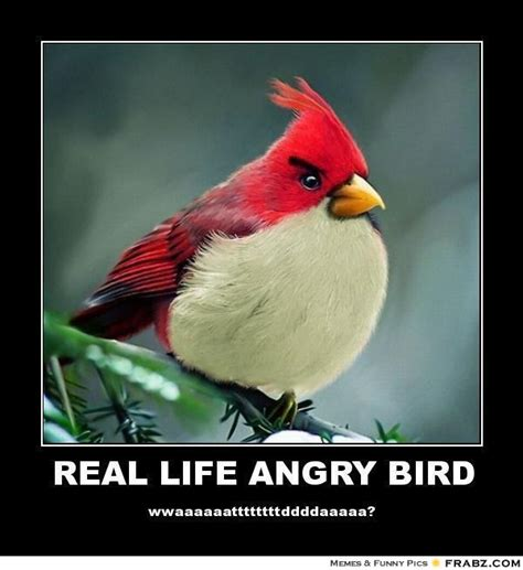 Meme Bird - funny bird quotes quotesgram