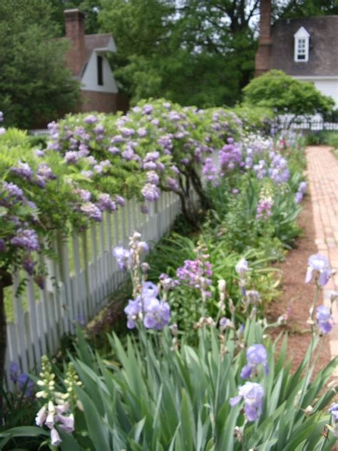 Image Wisteria 4360 Colonial Jpg 57 Best Gardens Historic Triangle Images On