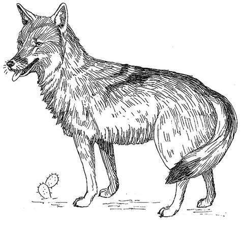 coyote clipart  page  public domain clip art
