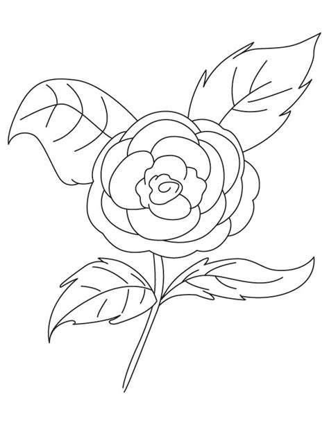 camellia flower coloring page draw a camellia coloring pages
