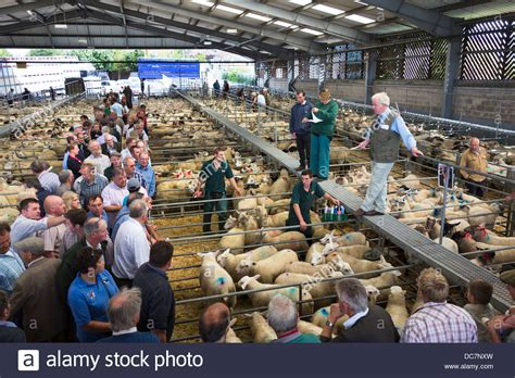 livestock auction the livestock auction at melton market melton mowbray