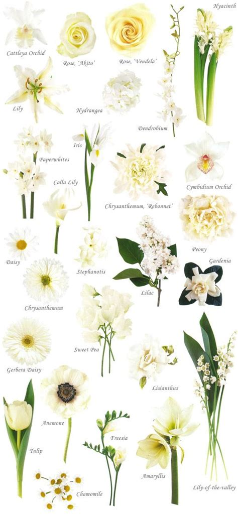 List Of Garden Flowers Common Names Best 25 Flower Names Ideas On Flower Chart Diy Wedding Flower Guides And Wedding