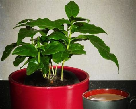 name of common house plant photos and names of common house plants