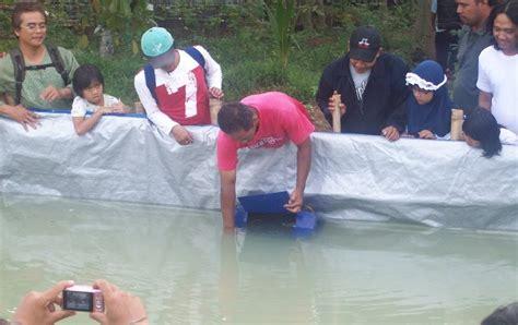 Bibit Lele Jember hindari sortir benih ikan lele dari kolam yg satu ke kolam