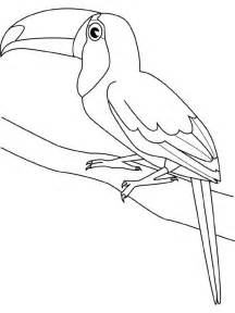 coloring page of a toucan bird toucan bird coloring page for kids animal coloring pages