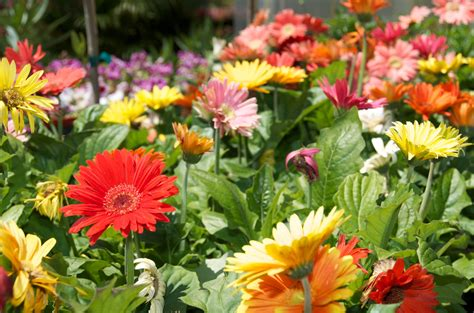 Annual And Perennial Flowers Pittsburgh Pa Best Feeds Annual Garden Flowers