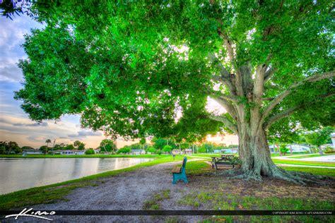 oak tree rubber st sebastian product categories royal stock photo