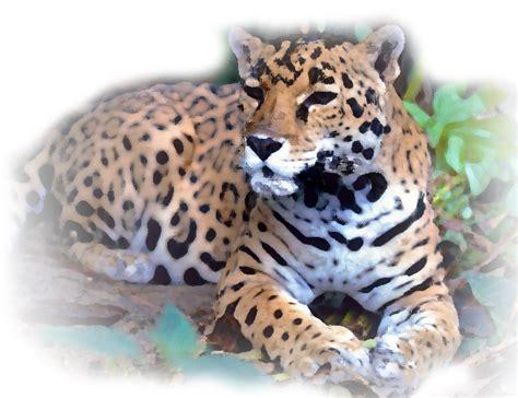 imagenes de jaguar en peligro de extincion 10 animales en peligro de extinci 243 n en m 233 xico el pa 205 s