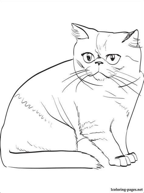 coloring pages exotic animals exotic shorthair cat coloring page coloring pages