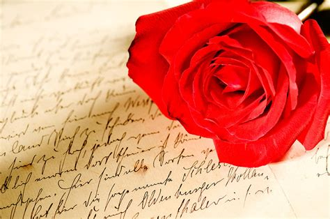 red rose over a hand written letter photograph by u schade