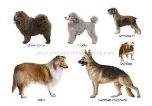 different of dogs some different types of dogs breeds dogs picture