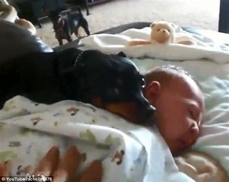 dogs protecting babies dogs protecting babies breeds picture