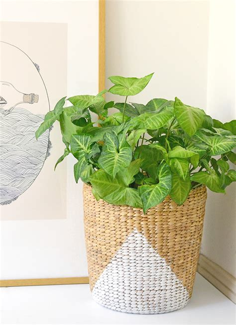 Basket Planter Diy Painted Basket Planter Make And Tell