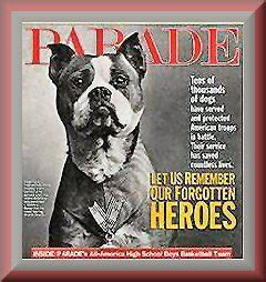 Sergeant Stubby Medals Of Pit Bulls And Morons Time Magazine S Quot Top 10 Heroic Animals
