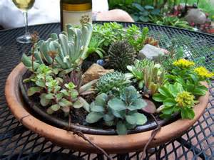 succulents are succulent they make me happy garden drama