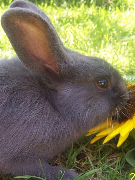 ab wann töpfchen durchfall engystol ge kaninchen